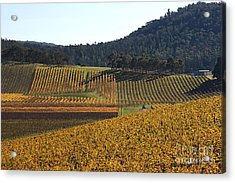golden vines-Victoria-Australia Acrylic Print by Joy Watson