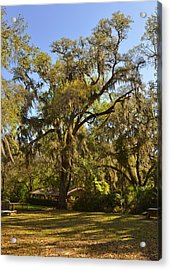 De Leon Springs - Classic Old Florida Acrylic Print by Christine Till