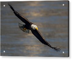 Dead Eye Acrylic Print by Glenn Lawrence