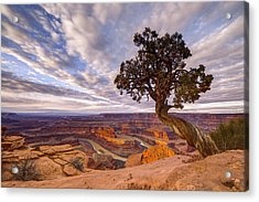 Dead Horse Point Sunrise Acrylic Print by Dustin  LeFevre