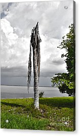Acrylic Print featuring the photograph Dead Palm by Timothy Lowry
