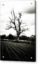 Dead Tree Acrylic Print by Joana Kruse
