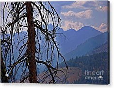 Dead Tree Mountains Landscape Acrylic Print by Valerie Garner