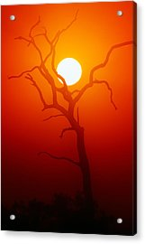 Dead Tree Silhouette And Glowing Sun Acrylic Print by Johan Swanepoel