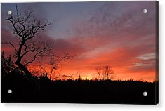 Dead Tree Sunrise Acrylic Print