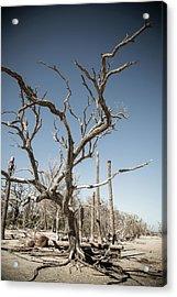 Dead Trees On Beach Acrylic Print