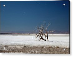 Dead Trees On Salt Flat Acrylic Print by Jim West