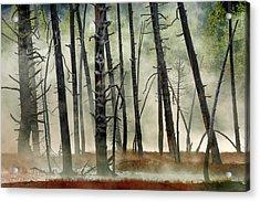Dead Wood Acrylic Print