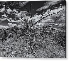 Dead Wood Acrylic Print by Thomas Schreiter