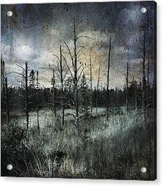 Deadwood Acrylic Print