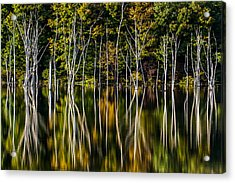 Acrylic Print featuring the photograph Deadwood by Mihai Andritoiu