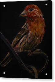 Deans Bird Acrylic Print by Sherry Robinson