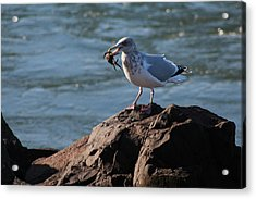 Death By Seagull Acrylic Print