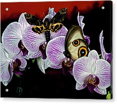 Death Heads Moth Meets Silky Owl Butterfly On Orchid Flower Acrylic Print by Leslie Crotty