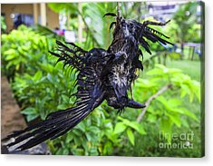 Death Raven Hanging In The Rope Acrylic Print by Gina Koch