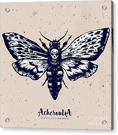 Deaths-head Hawkmoth. Hand Drawn Vector Acrylic Print