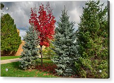 Deciduous And Evergreens Acrylic Print
