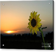 Acrylic Print featuring the photograph Sunflower And Sunset by Mae Wertz