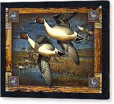 Deco Pintail Ducks Acrylic Print by JQ Licensing