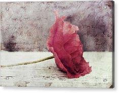 Decor Poppy Horizontal Acrylic Print by Priska Wettstein