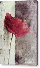 Decor Poppy Acrylic Print by Priska Wettstein