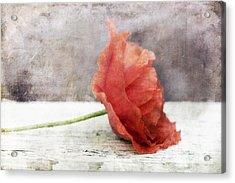 Decor Poppy Red Acrylic Print by Priska Wettstein