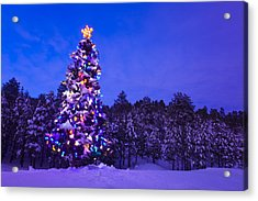 Decorated & Lit Christmas Tree In A Acrylic Print by Michael DeYoung