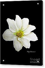 Decorative White Floral Flower Art Original Chic Painting Madart Studios Acrylic Print by Megan Duncanson