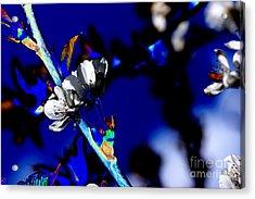 Deep Blue Acrylic Print by Carol Lynch