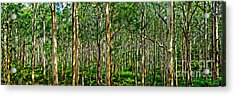 Deep Forest Acrylic Print by Az Jackson