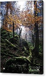 Deep Forest Acrylic Print