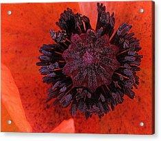 Deep In Bloom Acrylic Print