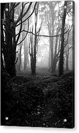 Deep In The Florest Acrylic Print by Jorge Maia