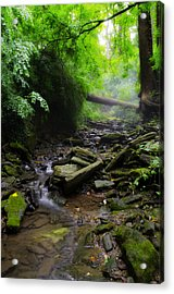 Deep In The Woods Acrylic Print by Bill Cannon