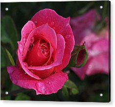 Deep Pink Beauty Acrylic Print by Rona Black