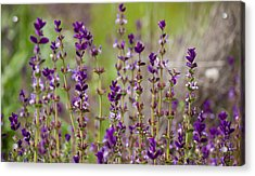 Acrylic Print featuring the photograph Deep Purple by Uri Baruch
