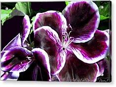 Deep Purple Vibrant Flower Macro Acrylic Print by Danielle  Parent