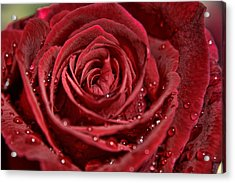 Deep Red Rose Acrylic Print