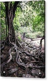 Deep Rooted Acrylic Print by Nick  Shirghio
