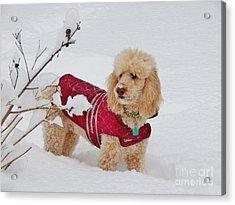 Deep Snow I Go Acrylic Print by Judy Via-Wolff