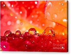 Deep Within A Rose Acrylic Print