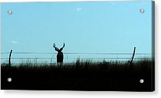 Acrylic Print featuring the photograph Ohhhh Deer by Shirley Heier