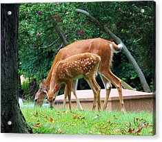 Deer And Fawn Acrylic Print by Adam L