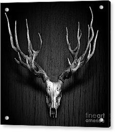 Deer Antler Hang On Wood Panel Acrylic Print