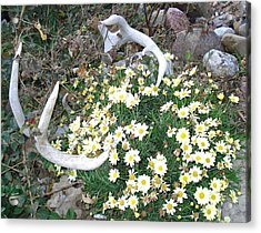 Acrylic Print featuring the photograph Deer Antler Two by J L Zarek