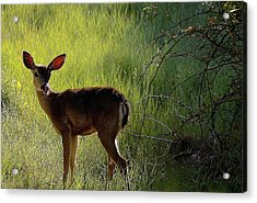 Deer At Home Away From Home Acrylic Print