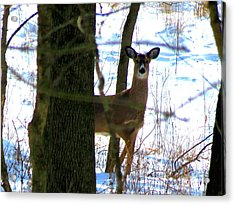Acrylic Print featuring the photograph Deer At Park by Eric Switzer