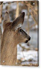 Deer Day Dreamer Acrylic Print