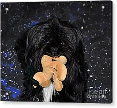 Deer Dog Acrylic Print by Al Powell Photography USA