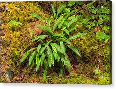 Deer Fern Acrylic Print by Rich Leighton